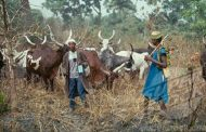 Herdsmen kill eight in Benue
